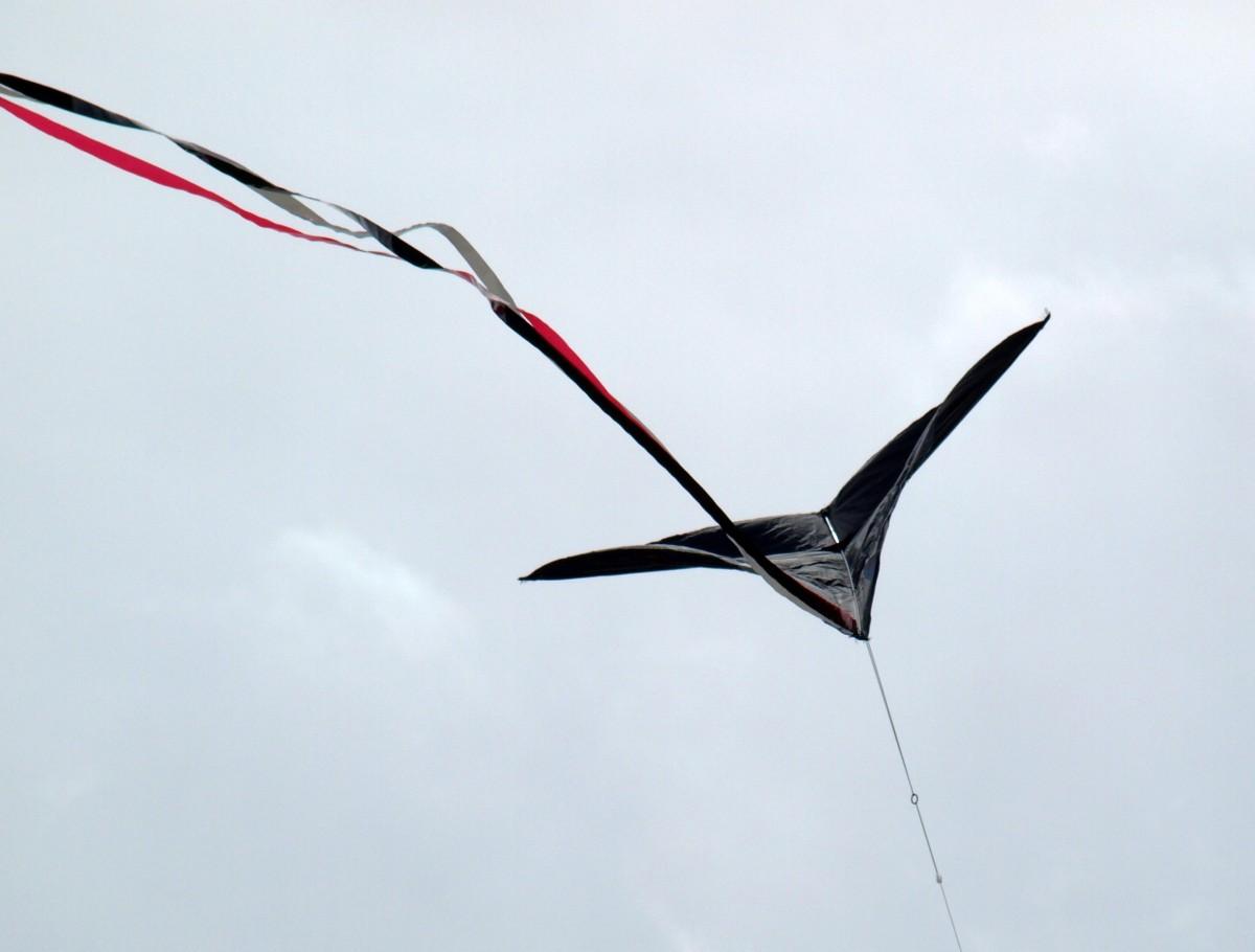 Картинка крылья ветра