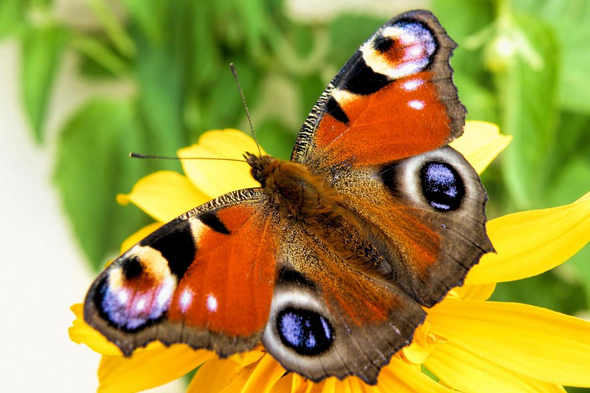 Спокойной, картинка бабочки