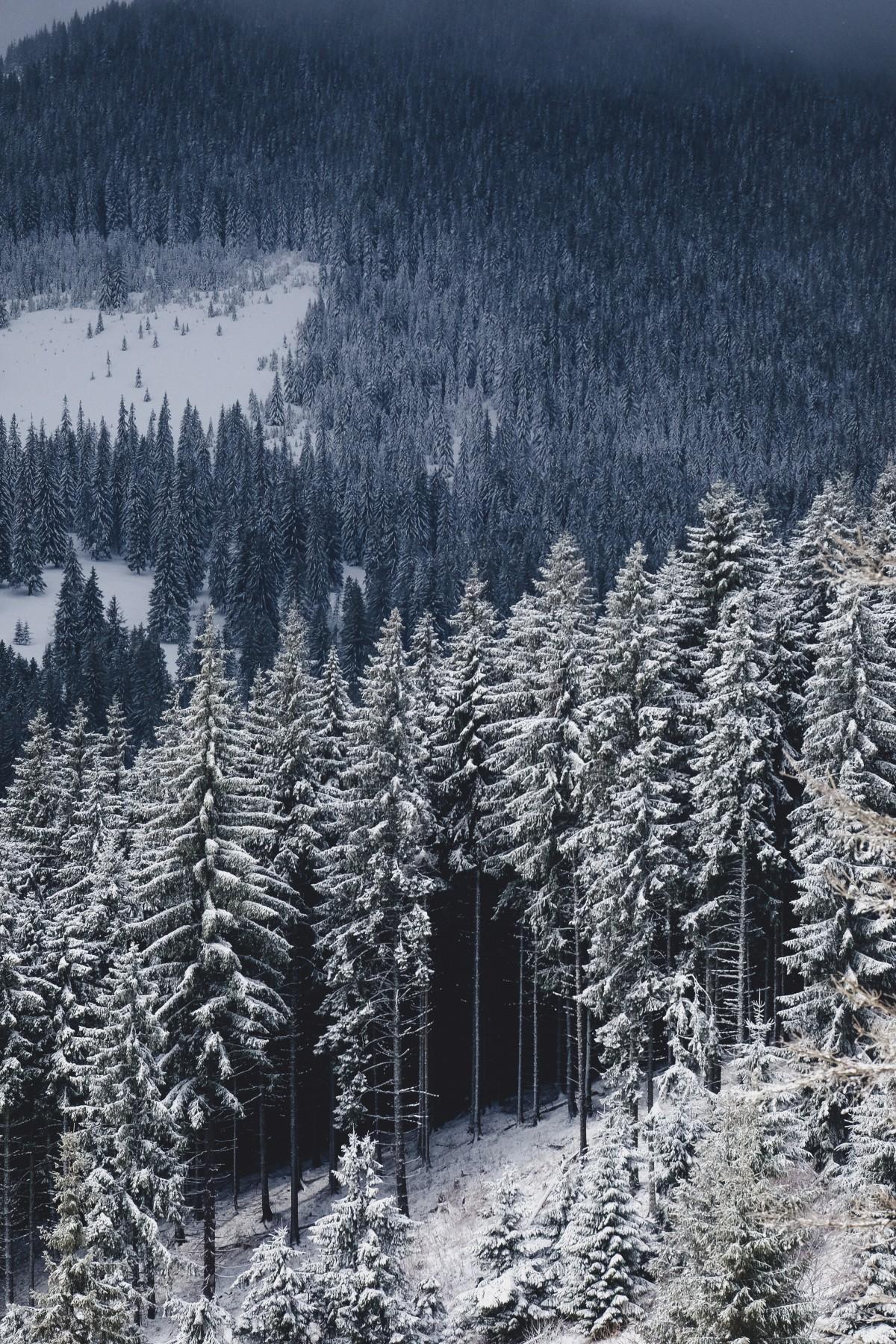 Imagini pentru imagini cu ninsoare în pădure