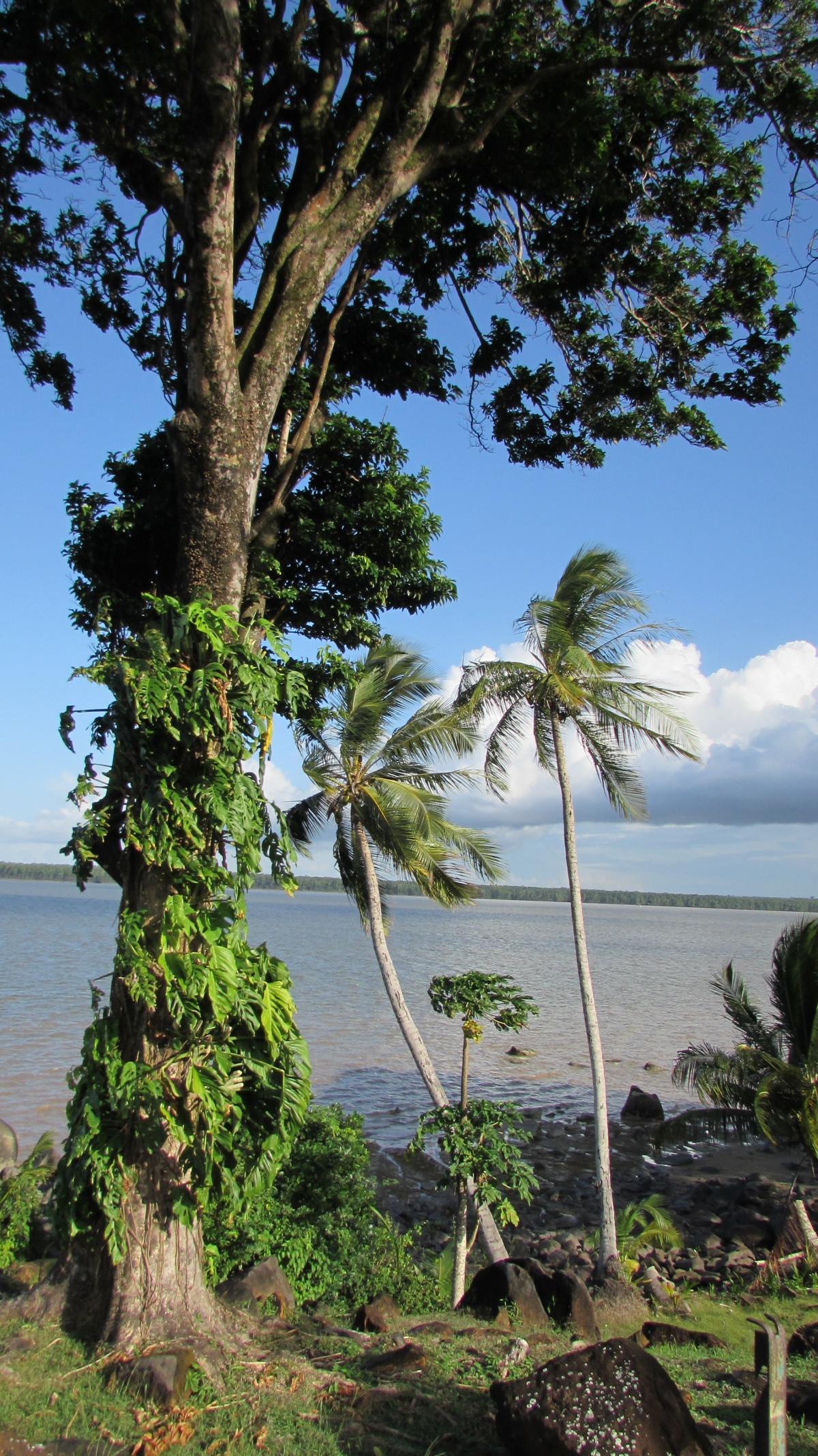 Images gratuites arbre la nature feuille fleur for Plante jungle