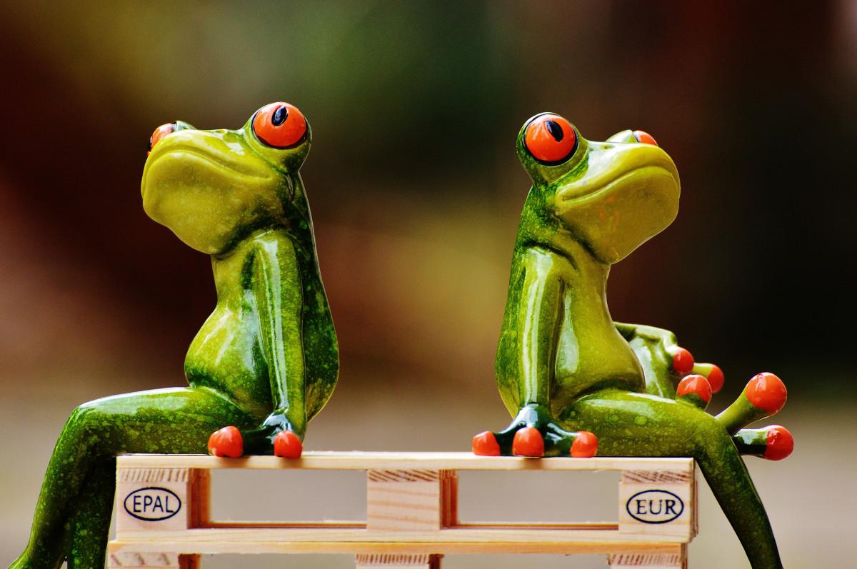 Днем, картинки смешные с лягушками