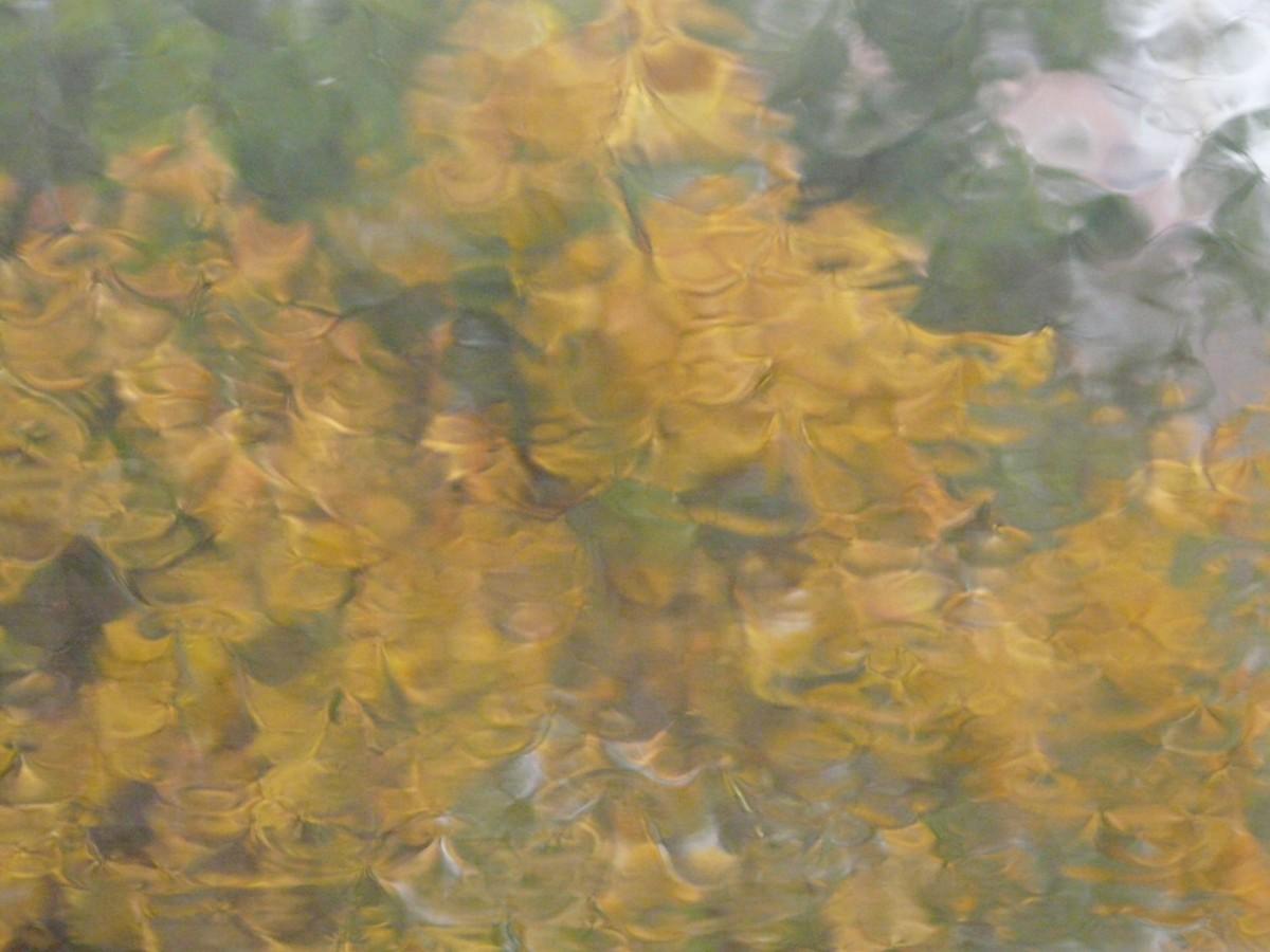 Kostenlose foto baum sonnenlicht textur regen blatt for Fenster nass