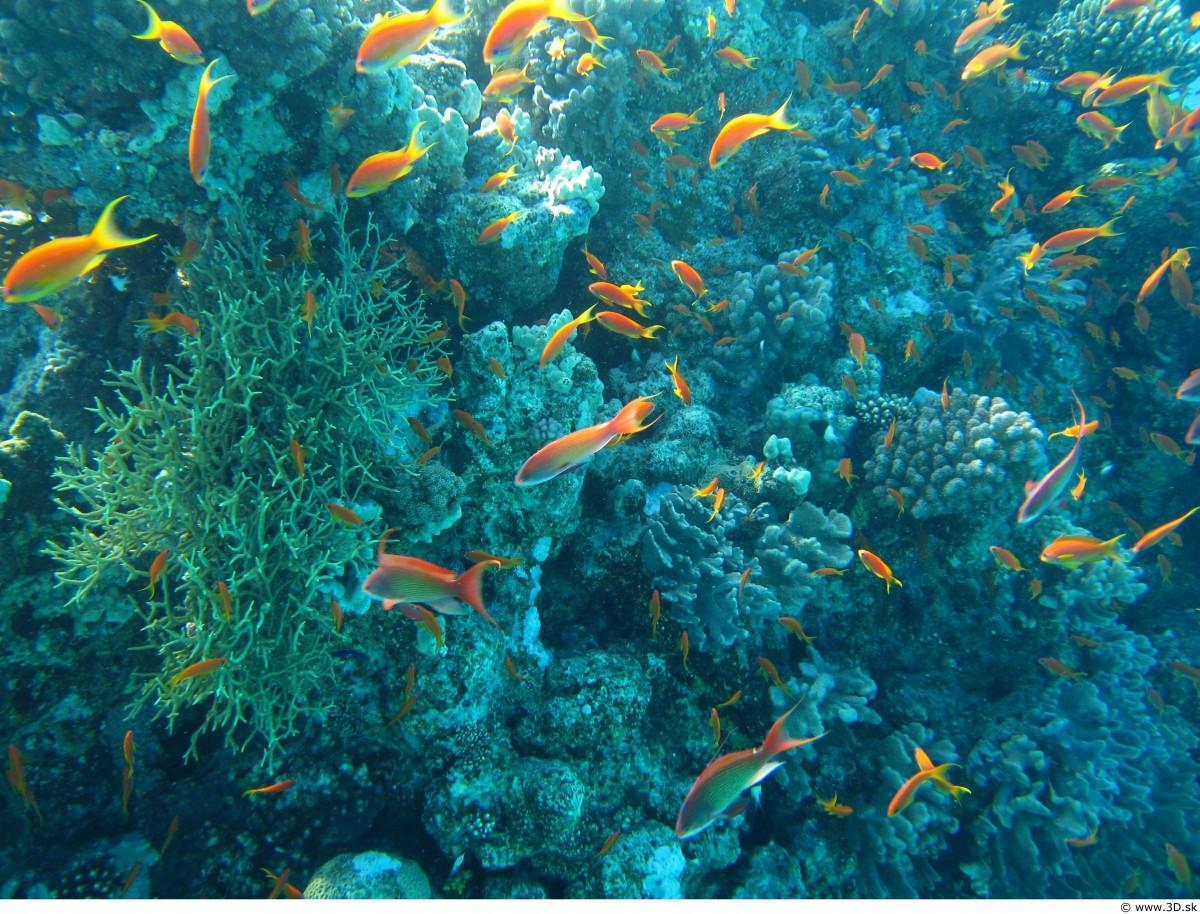 Free Images Water Ocean Floor Underwater Macro