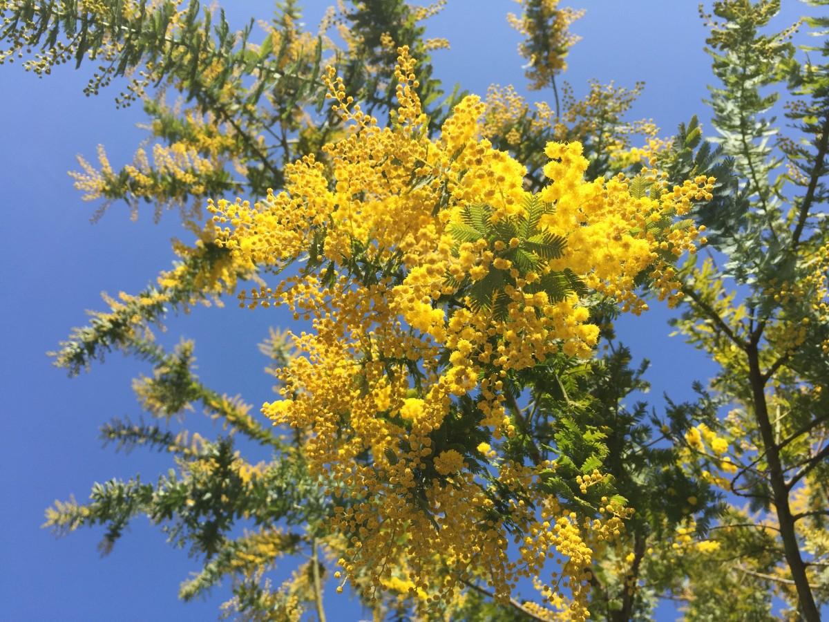 с летом и весны цветы фото