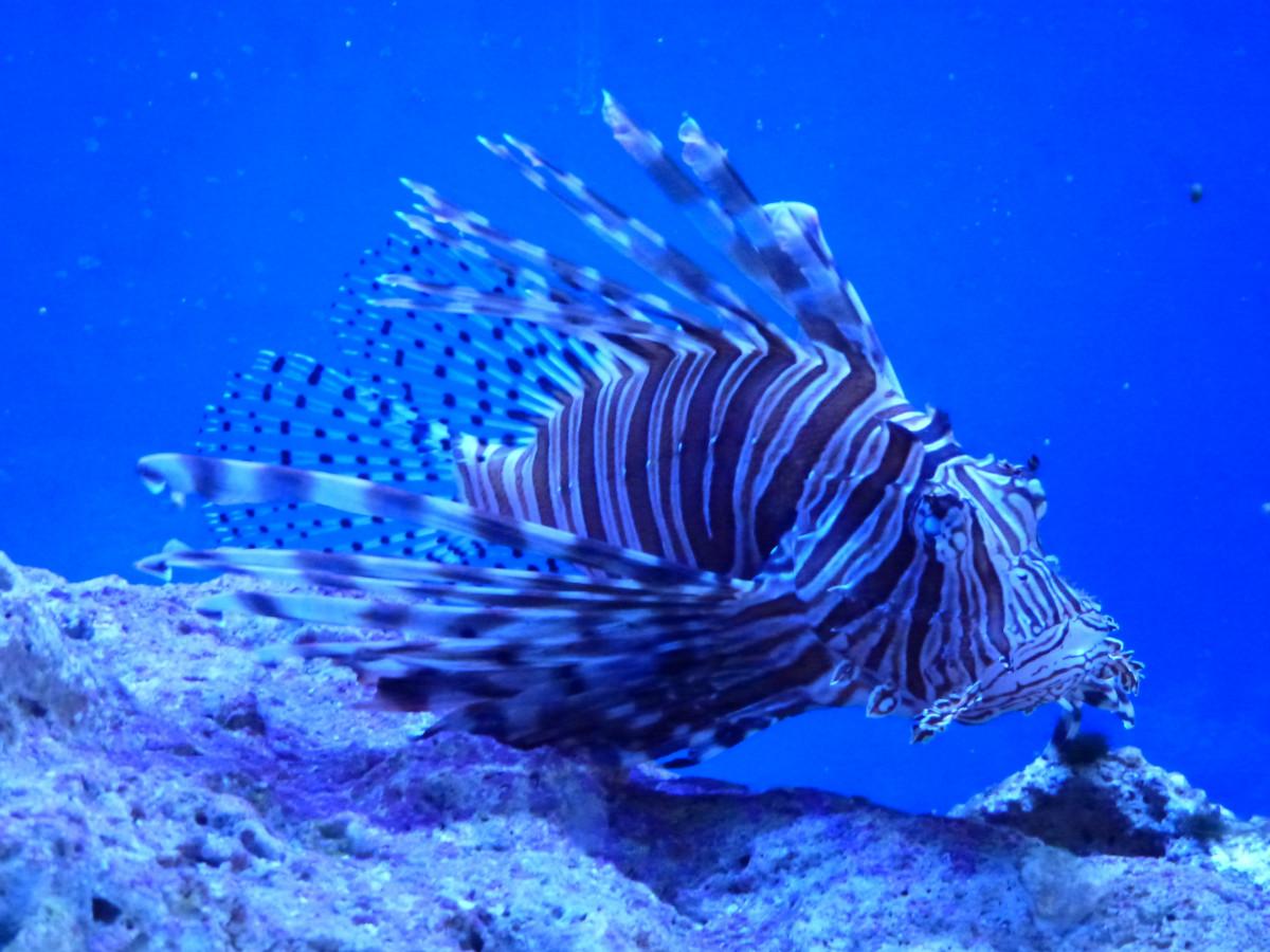 free images sea ocean wildlife underwater tropical natural
