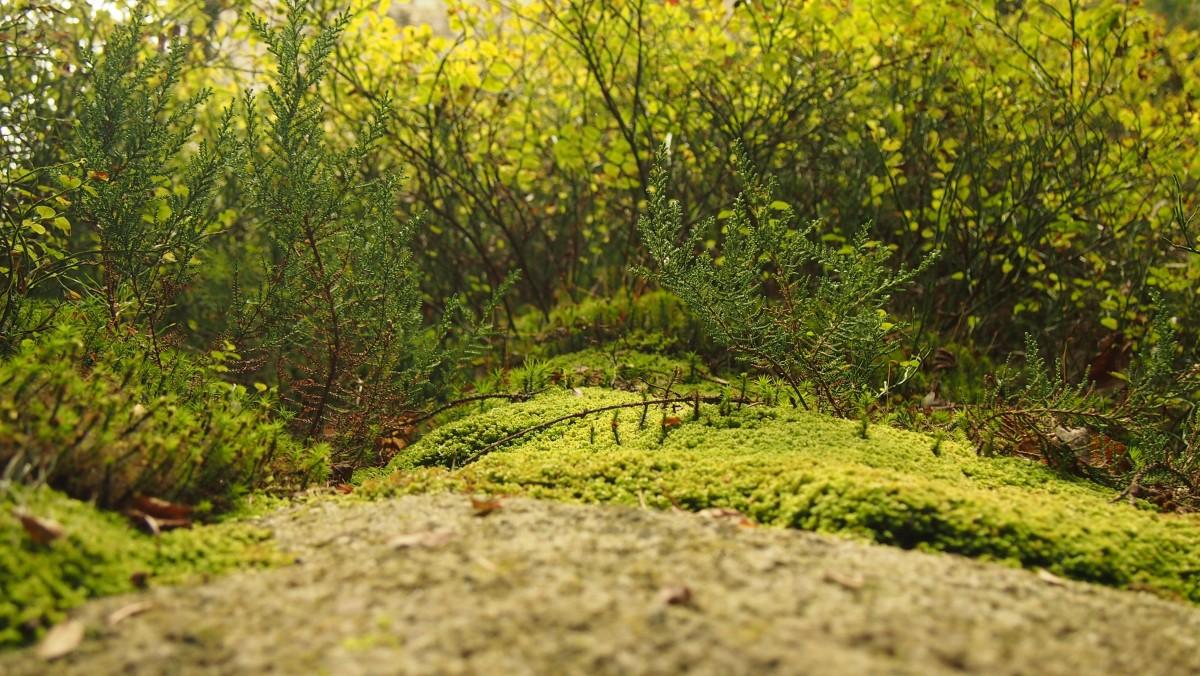 Images gratuites arbre herbe plante pelouse prairie for Plante herbe haute