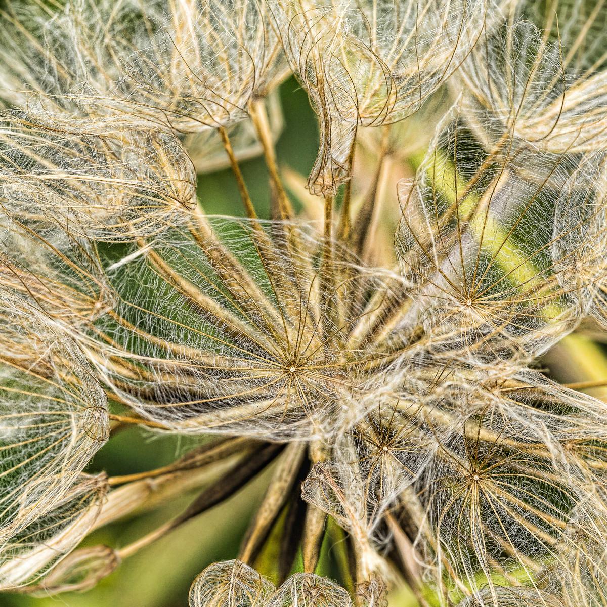 Images gratuites arbre branche fleur aliments for Plante western