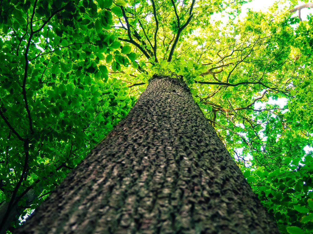 Gratis afbeeldingen landschap boom natuur bos tak fabriek hout zonlicht blad bloem - Leefgebied canape ...