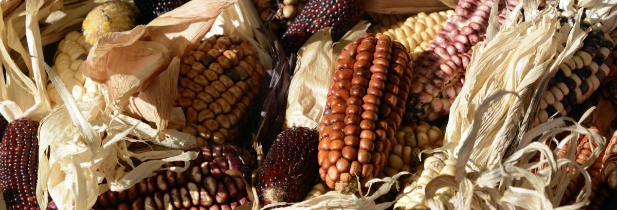 Gratis afbeeldingen fabriek decoratie schotel eten produceren groente gewas herfst - Decoratie schotel ...