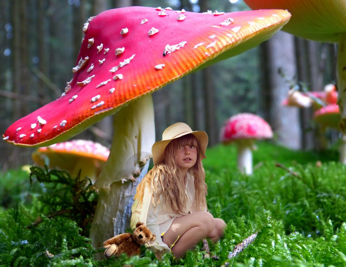 Смешные картинки грибов для детей, днем