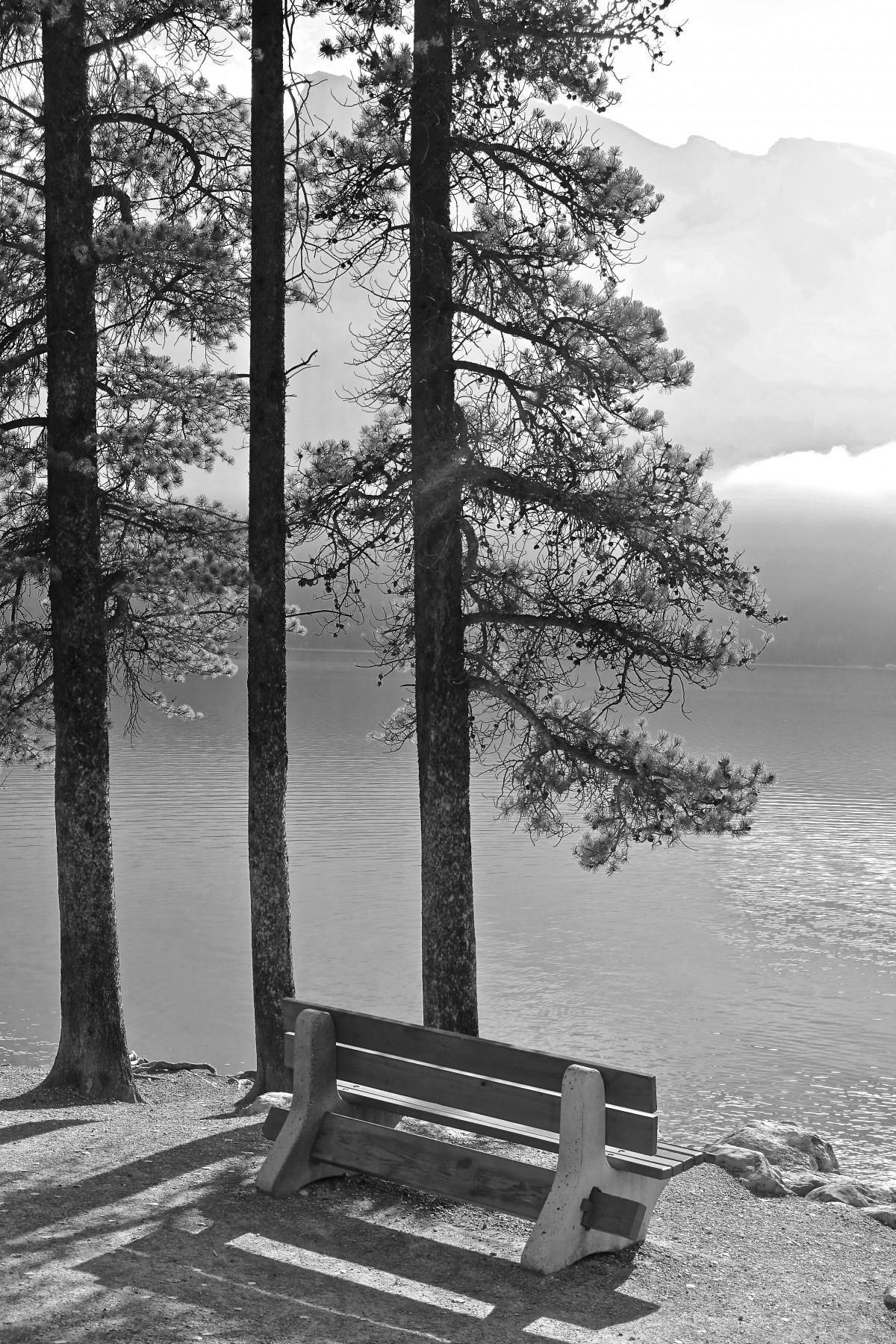 Fotos gratis paisaje rbol naturaleza nieve invierno for Arboles en invierno