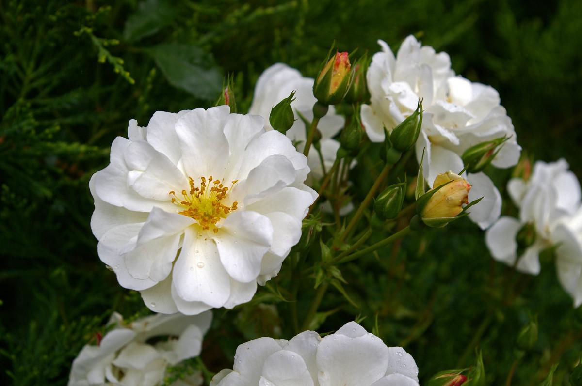 Landscape nature blossom plant white flower