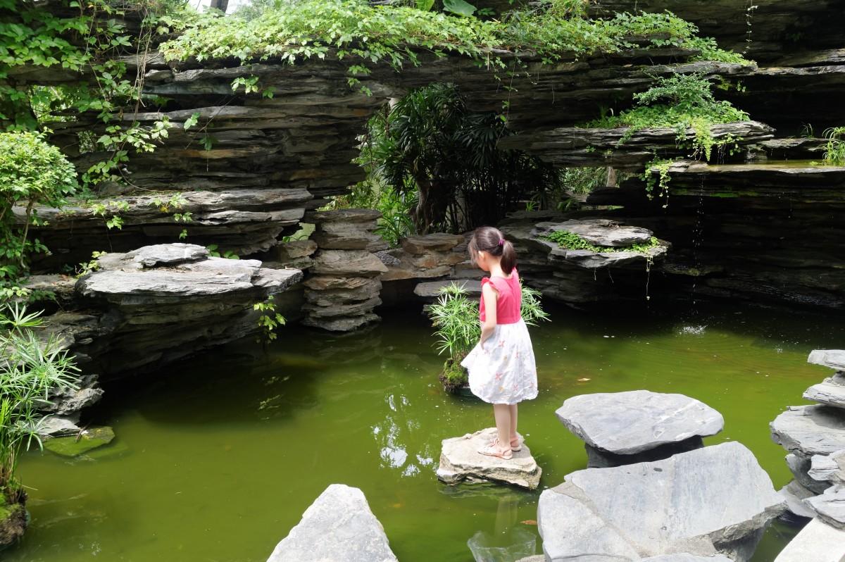 Fotos gratis paisaje naturaleza flor verde parque for Estanque reflectante