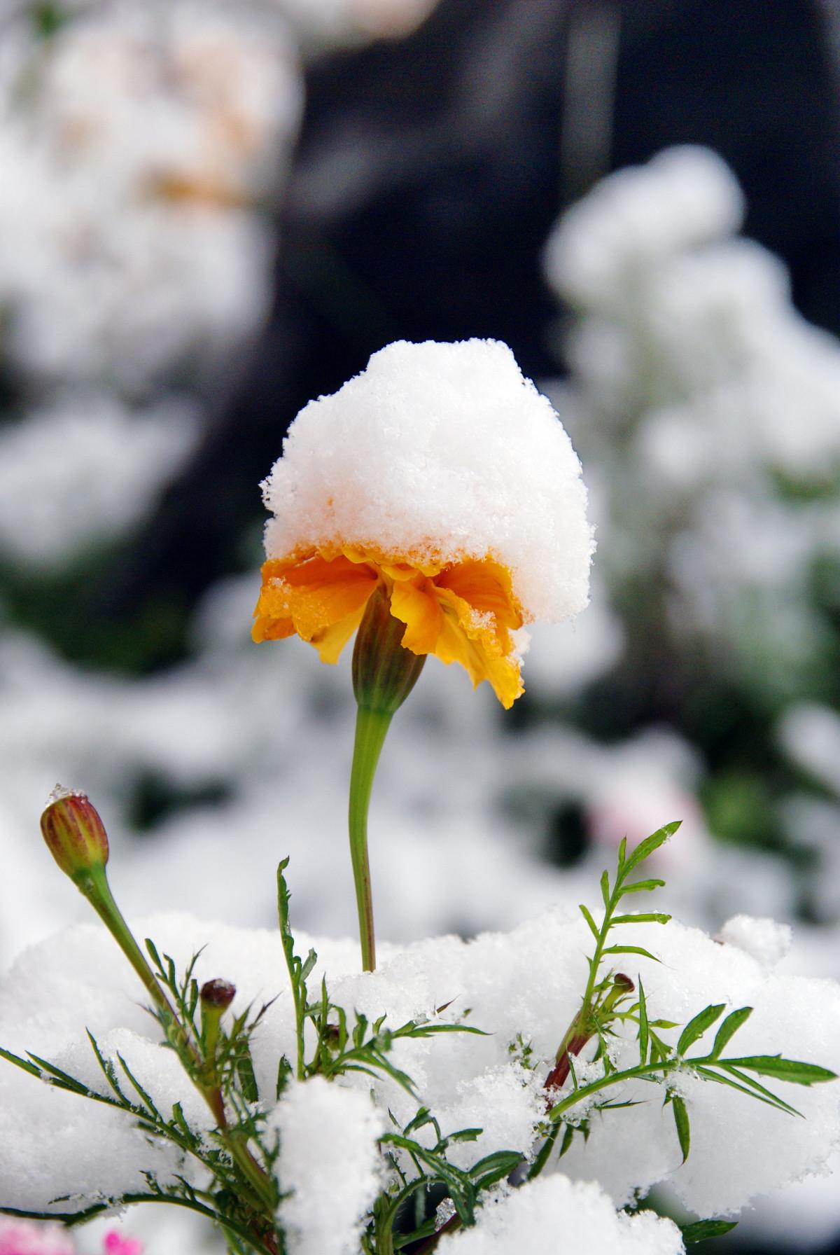 Цветы зимой картинки