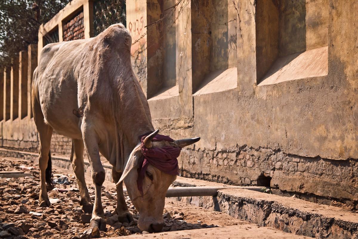 Gambar Unta Arab Camelid Margasatwa Kebun Binatang