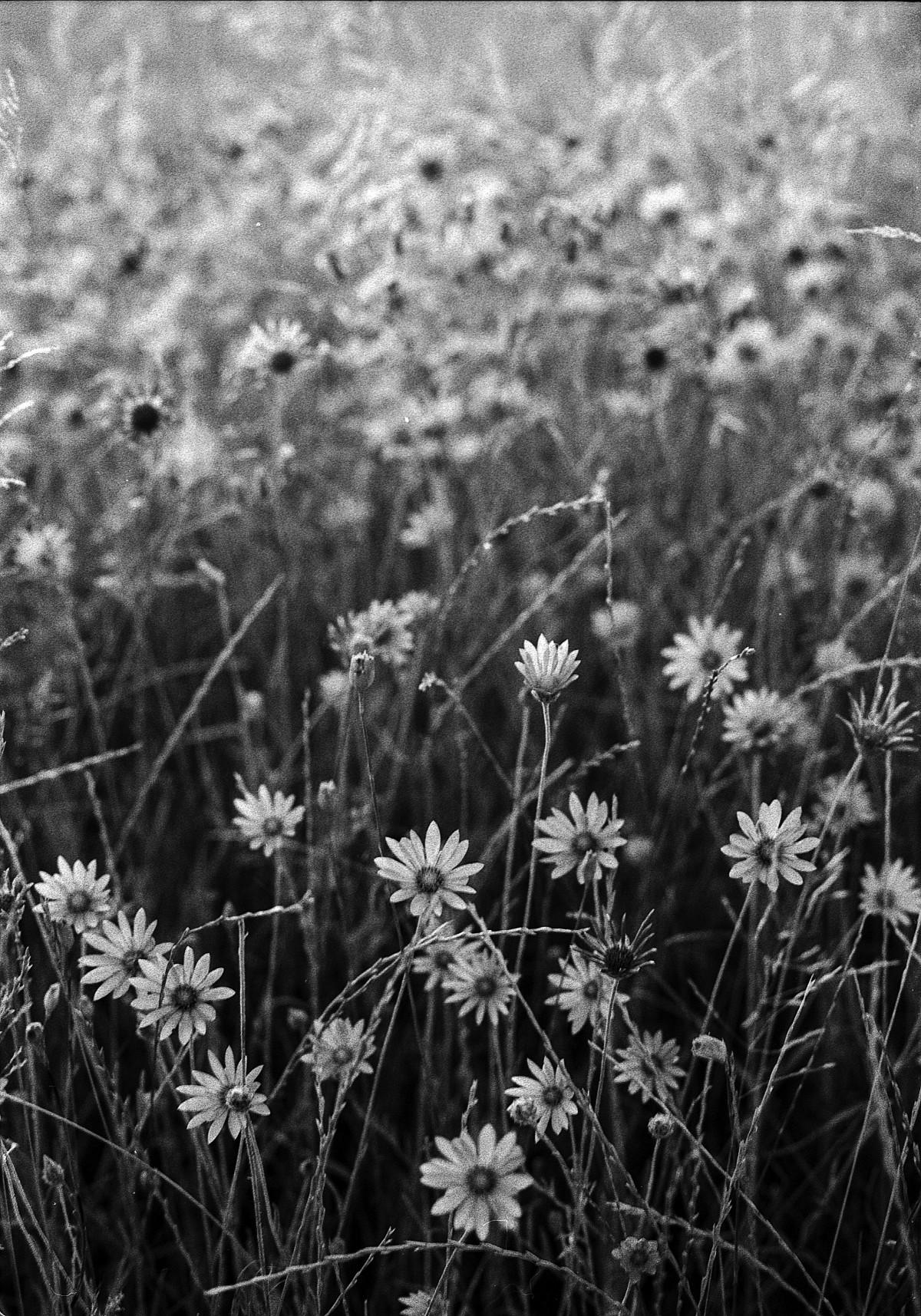 Просто красивые картинки черно белые