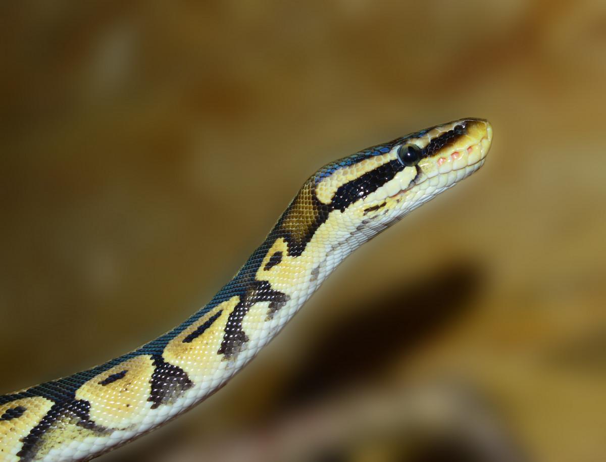 Scale e serpenti