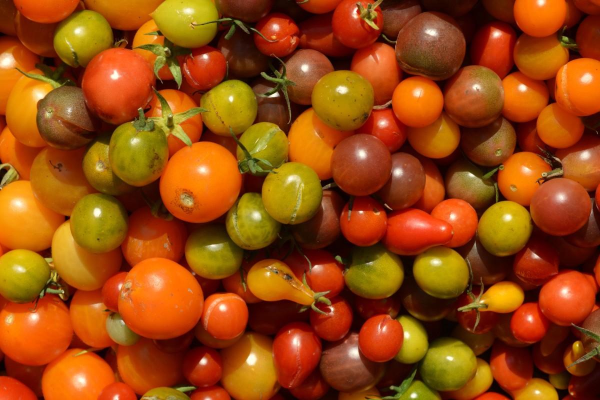 растение, фрукты, Пища, производить, Овощной, помидор, цвета, овощи, Помидоры, цветущее растение, помидоры черри, Наземный завод, Картофель и томатный сорт