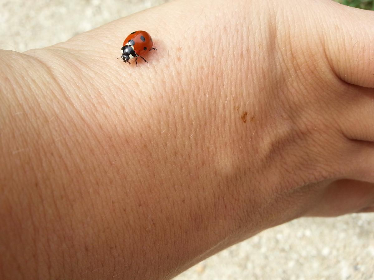 адрес Тольяттинского сон жуки под кожей граждан