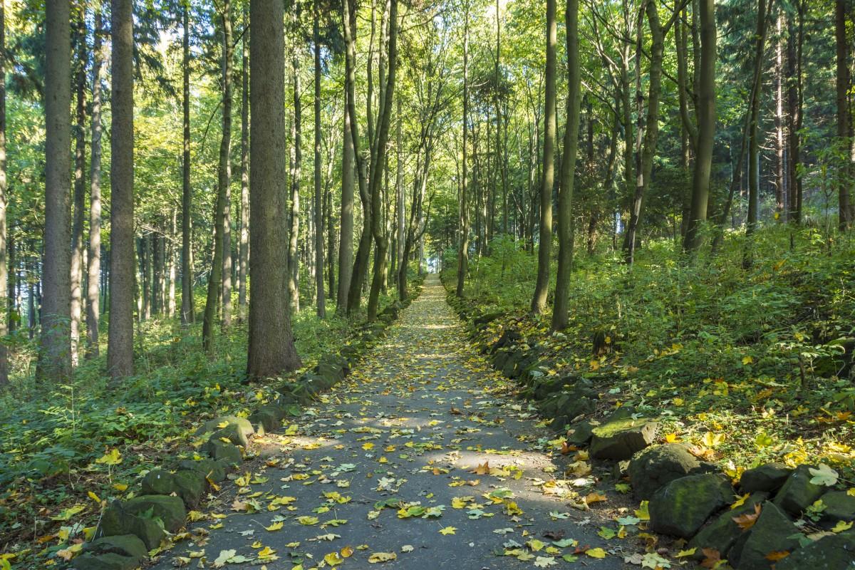 images gratuites arbre bois monument l 39 automne feuilles sculpture art couleur automne. Black Bedroom Furniture Sets. Home Design Ideas