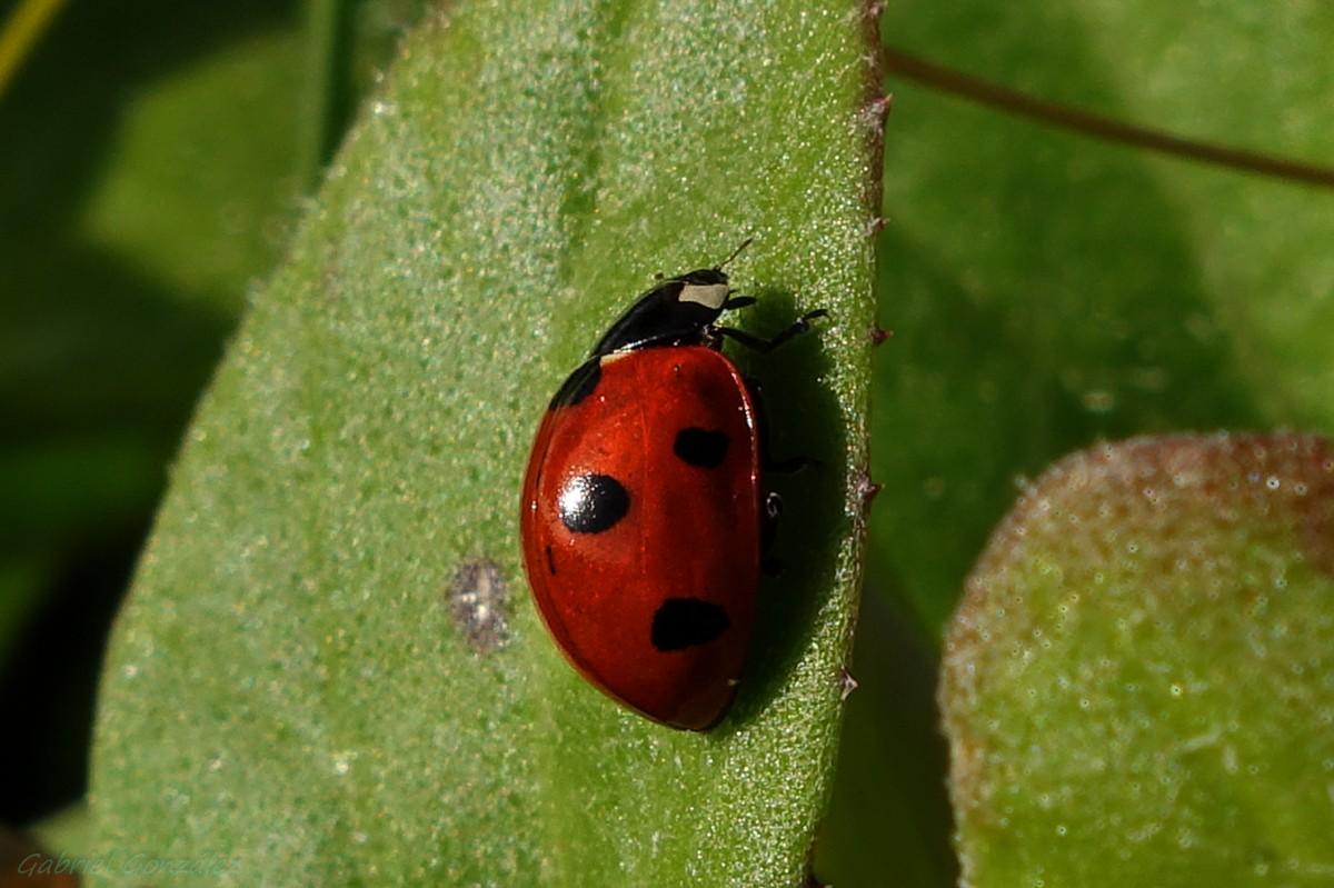 Images gratuites la nature la photographie feuille - Insecte vert volant ...
