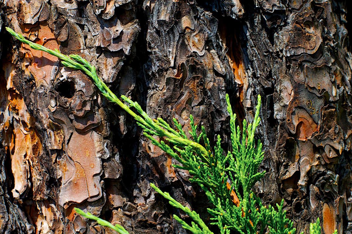 images gratuites arbre la nature for t feuille manhattan faune jungle l 39 automne saison. Black Bedroom Furniture Sets. Home Design Ideas