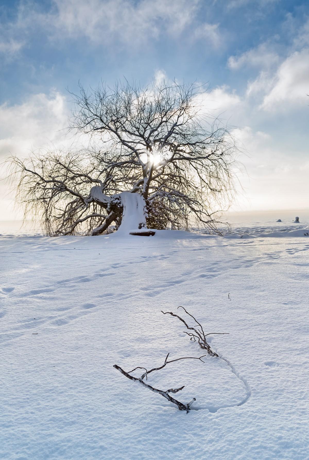 Immagini belle albero acqua natura ramo montagna la for Foto paesaggi gratis
