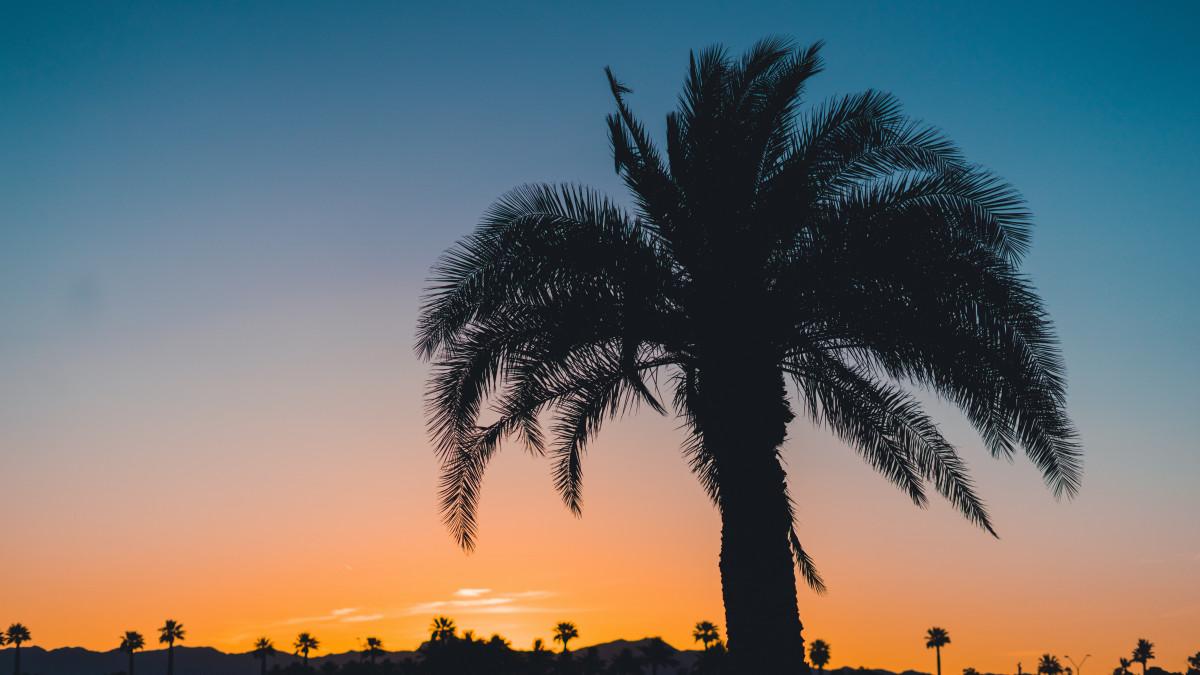 дело длинные картинки пальмы это