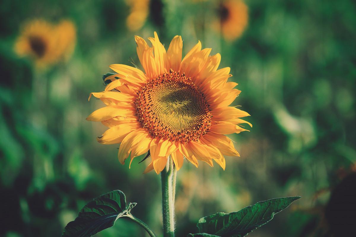 Gambar Menanam Sinar Matahari Benih Daun Bunga Serbuk Sari