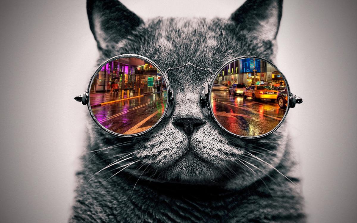 Free Images : color, blue, black, close up, cool ...