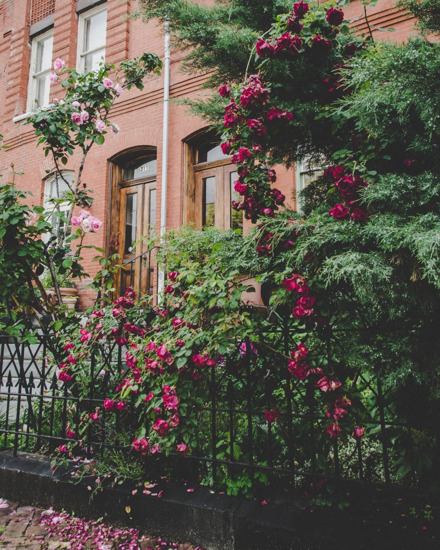 Immagini belle prato casa fiore cottage cortile for Disegni casa cottage