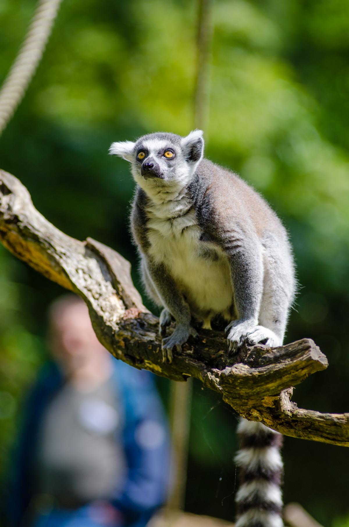Free Images : nature, animal, wildlife, zoo, mammal, fauna ...