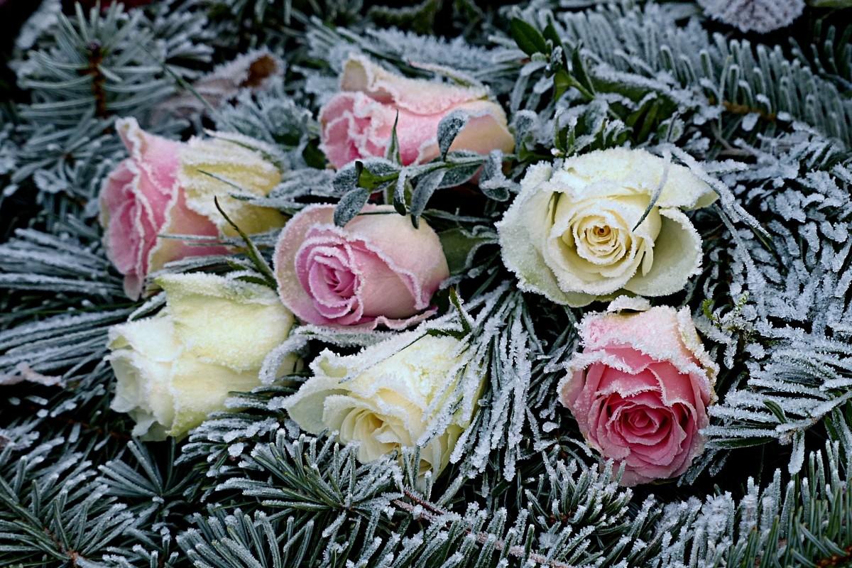 Открытка с цветами на снегу, открытки добрым