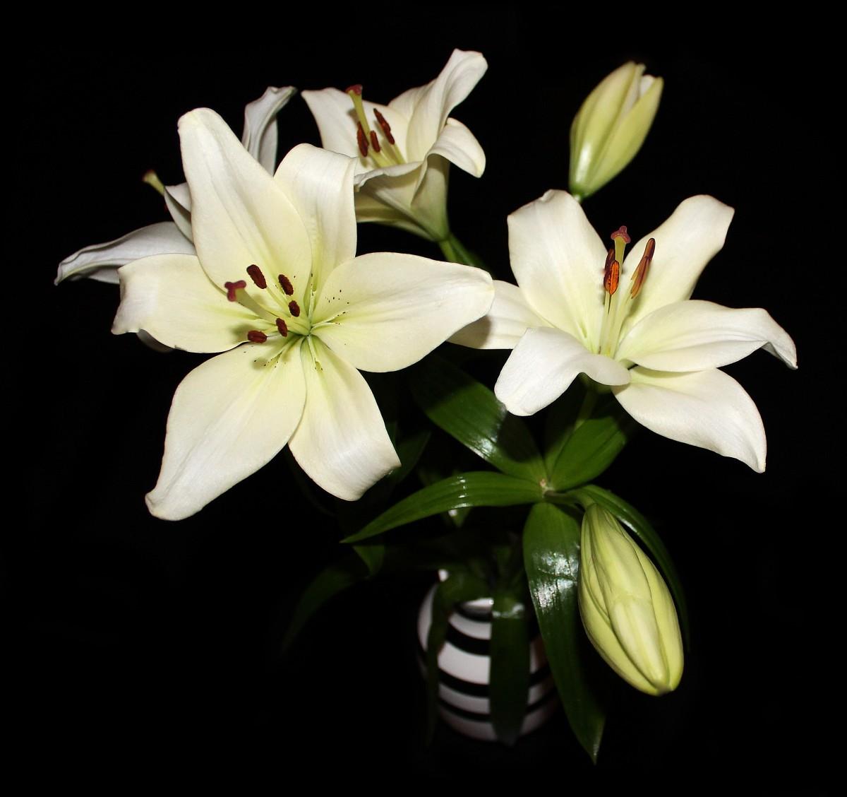 Free images white flower petal spring botany flora flowers blossom plant white flower petal bouquet izmirmasajfo