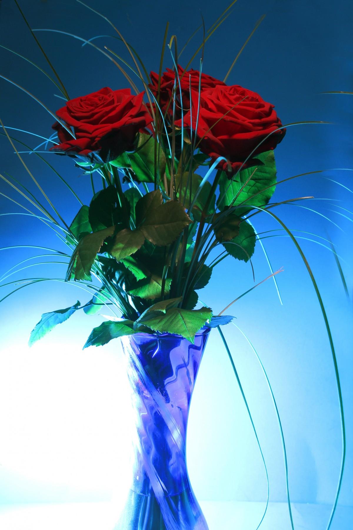 Images Gratuites Lumi 232 Re Fleur P 233 Tale Vase Vert Couleur Bleu Flore Rose Rouge Art