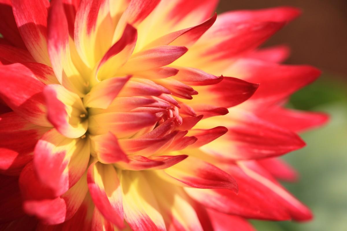 Gambar Mekar Menanam Daun Bunga Tinggi Flora Dahlia Gambar Keren Tokyo 5d Karyawan Markii Hai Soal Resolusi Jindaishokubutsukouen Choufu Fotografi Makro Tanaman Berbunga Keluarga Daisy Batang Tanaman Tanaman Tanah 5616x3744