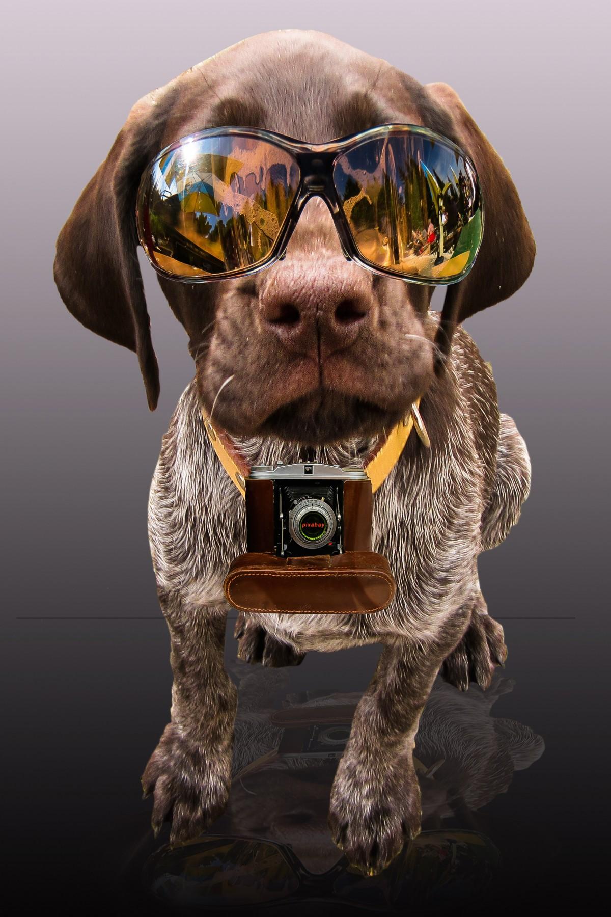Картинка с псом в очках