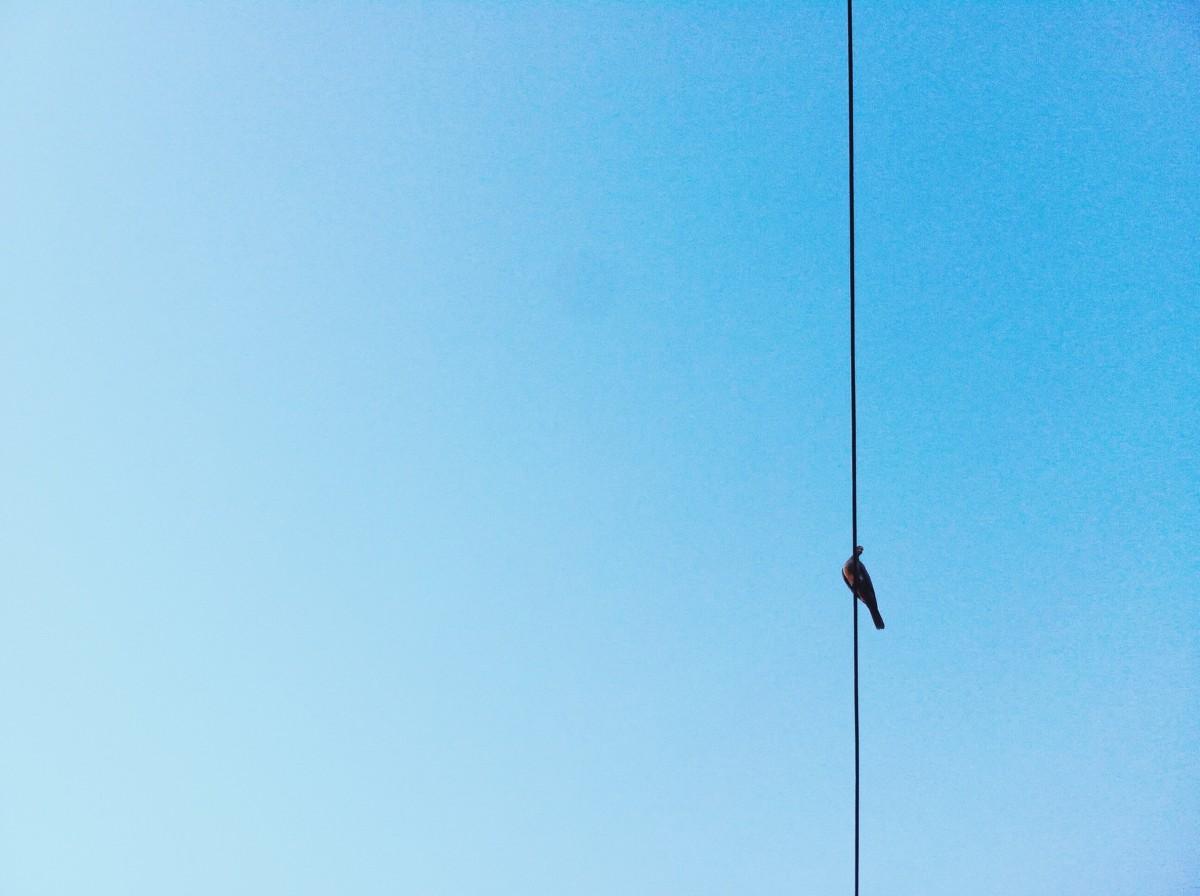 鳥, 空, 風, 動物, ケーブル, 線