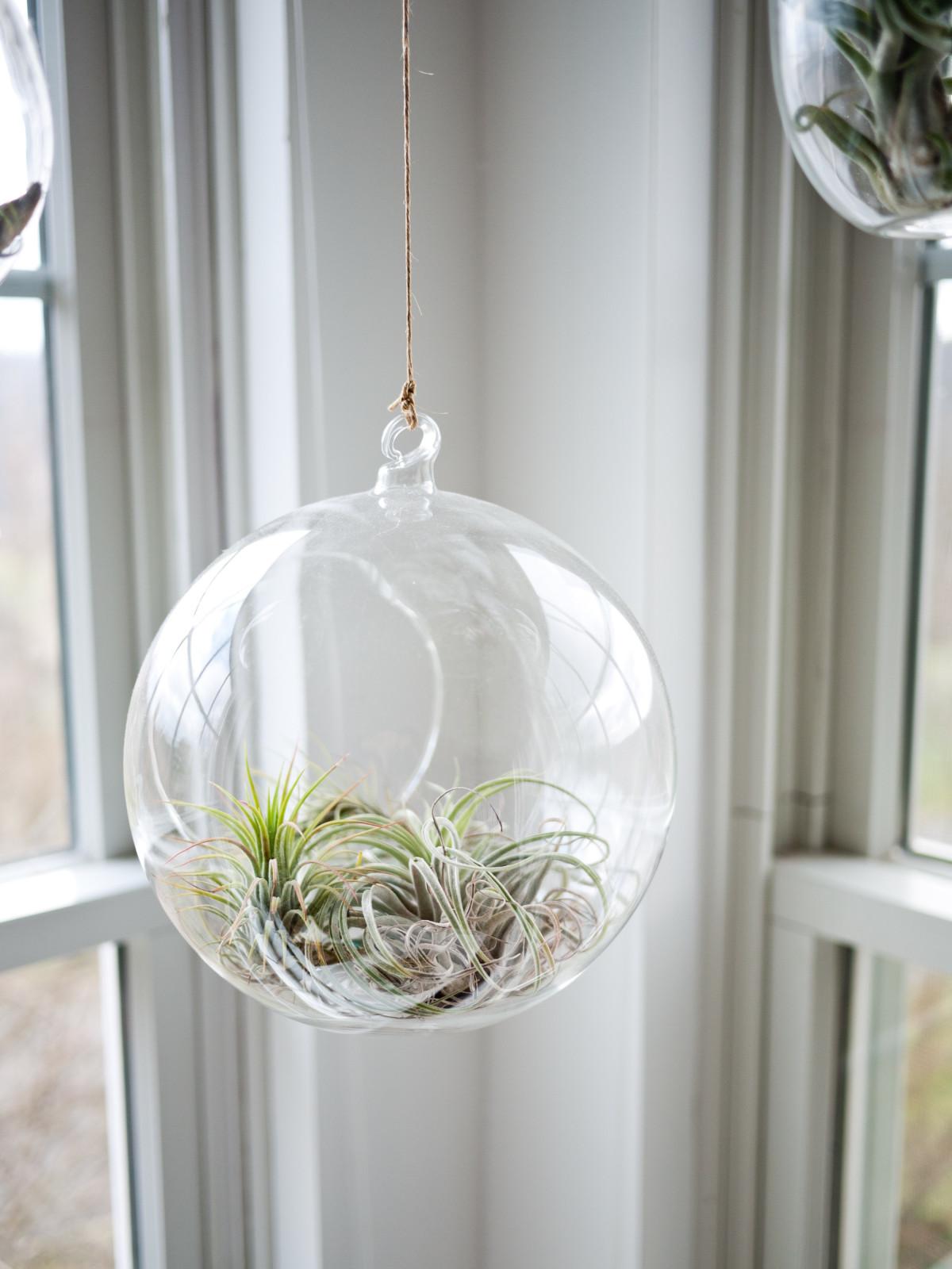 plant, glass, indoor, hanging, airplant, neutral, lighting, interior design, light fixture, floristry