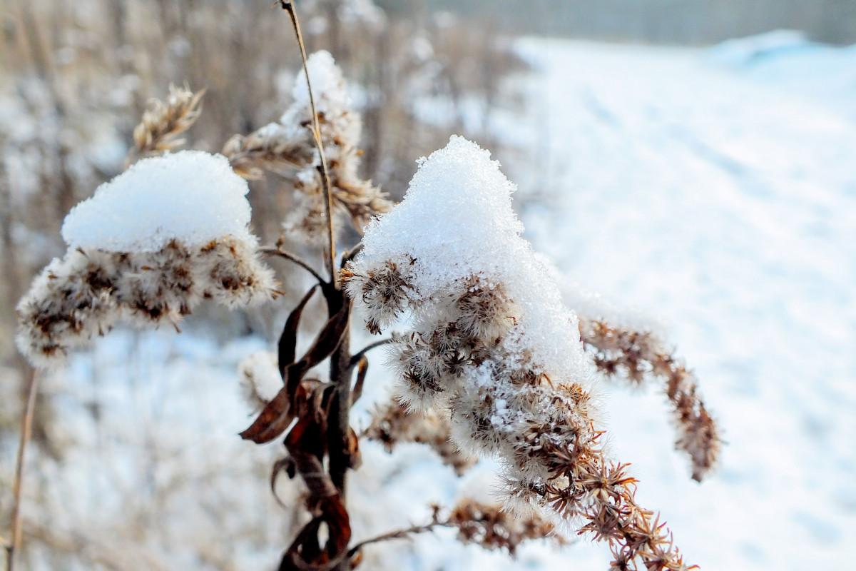Картинка трава зимой