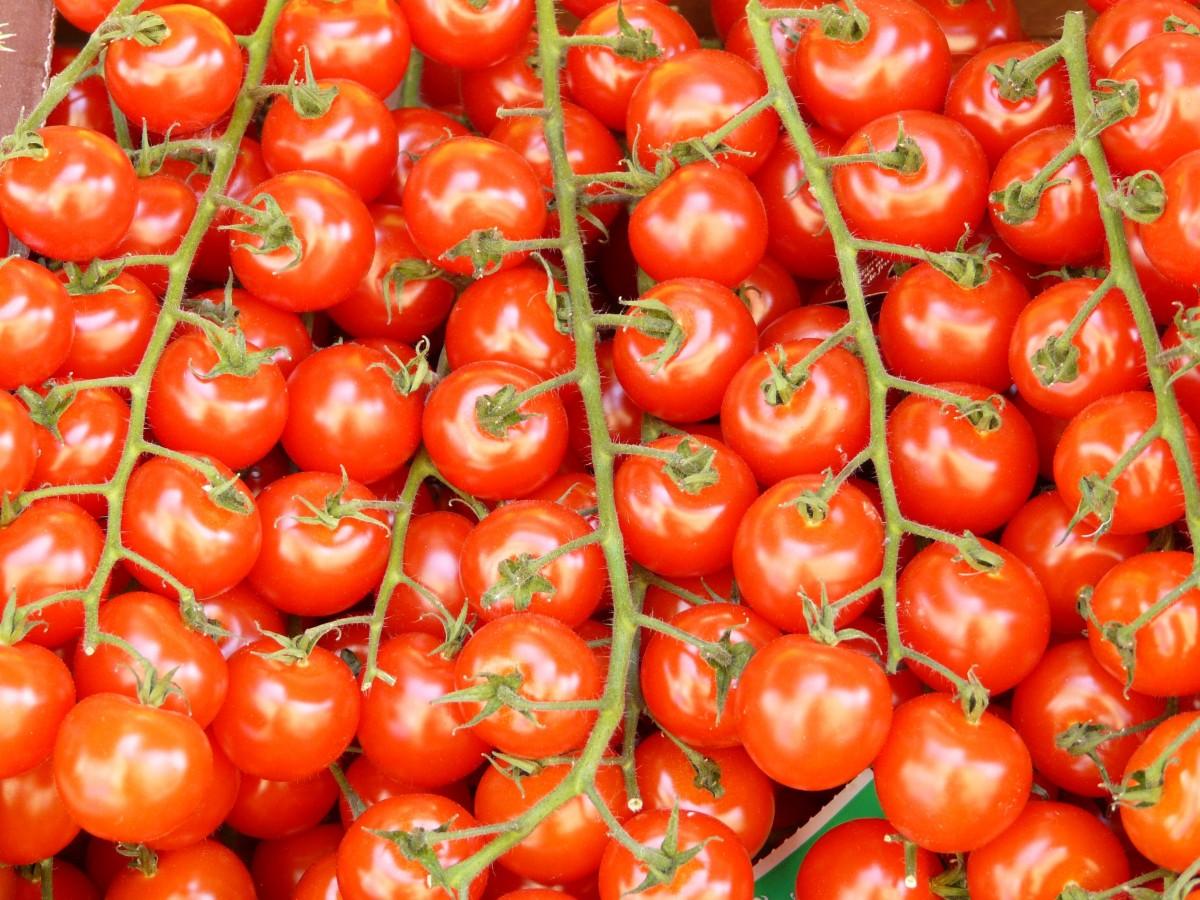 растение, фрукты, цветок, Пища, Красный, производить, Овощной, Здоровый, помидор, овощи, Помидоры, Витамины, цветущее растение, Томат, Сливовый помидор, Наземный завод, Картофель и томатный сорт