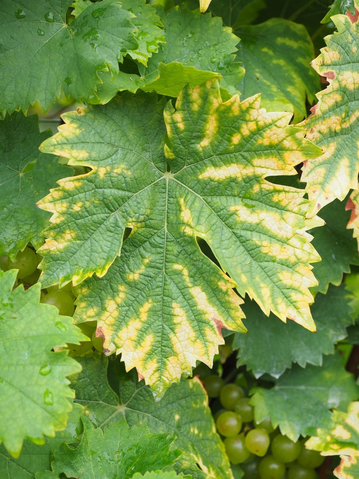 Free Images : fruit, flower, food, green, produce, autumn, botany ...
