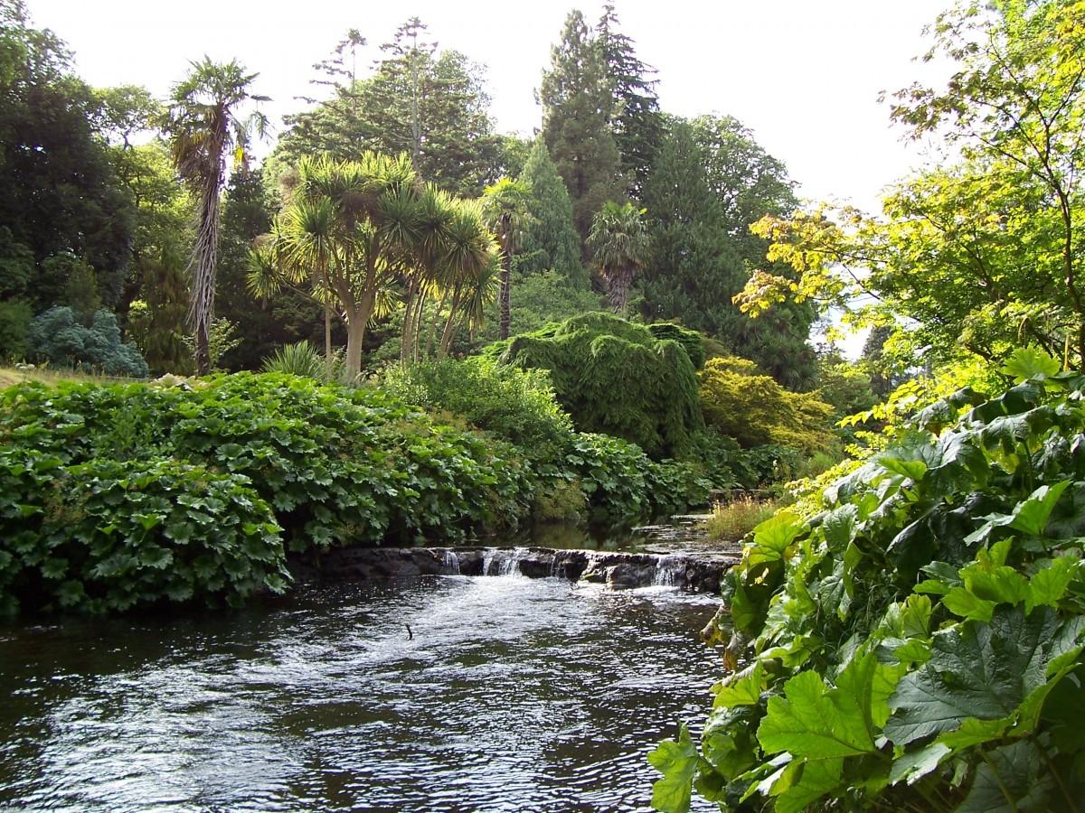 Images gratuites arbre eau feuille fleur rivi re for Beaux arbres de jardin