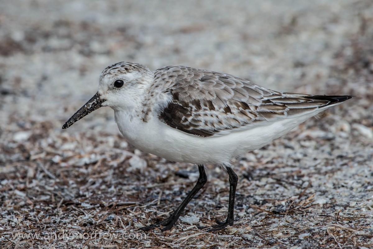 Images gratuites oiseau animal faune le bec fermer for Oiseau bec rouge