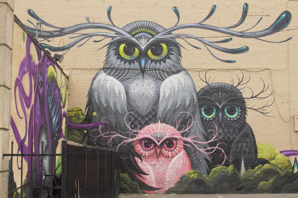 Bird Urban Artistic Paint Graffiti Owl