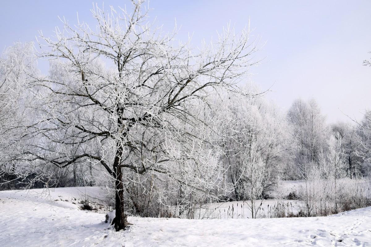 только картинка деревья и кусты зимой этом перчатки веник
