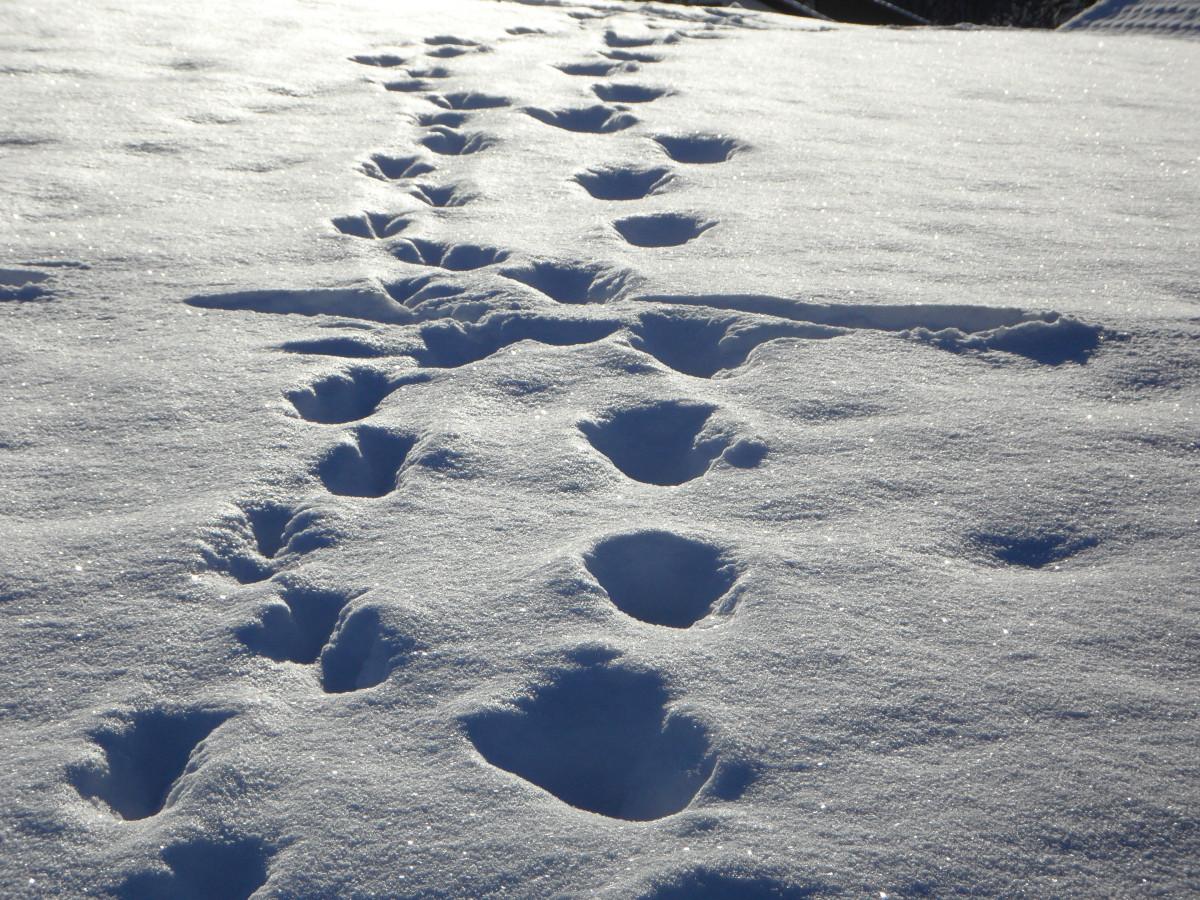 это особая следы двоих на снегу картинки сообщил, что