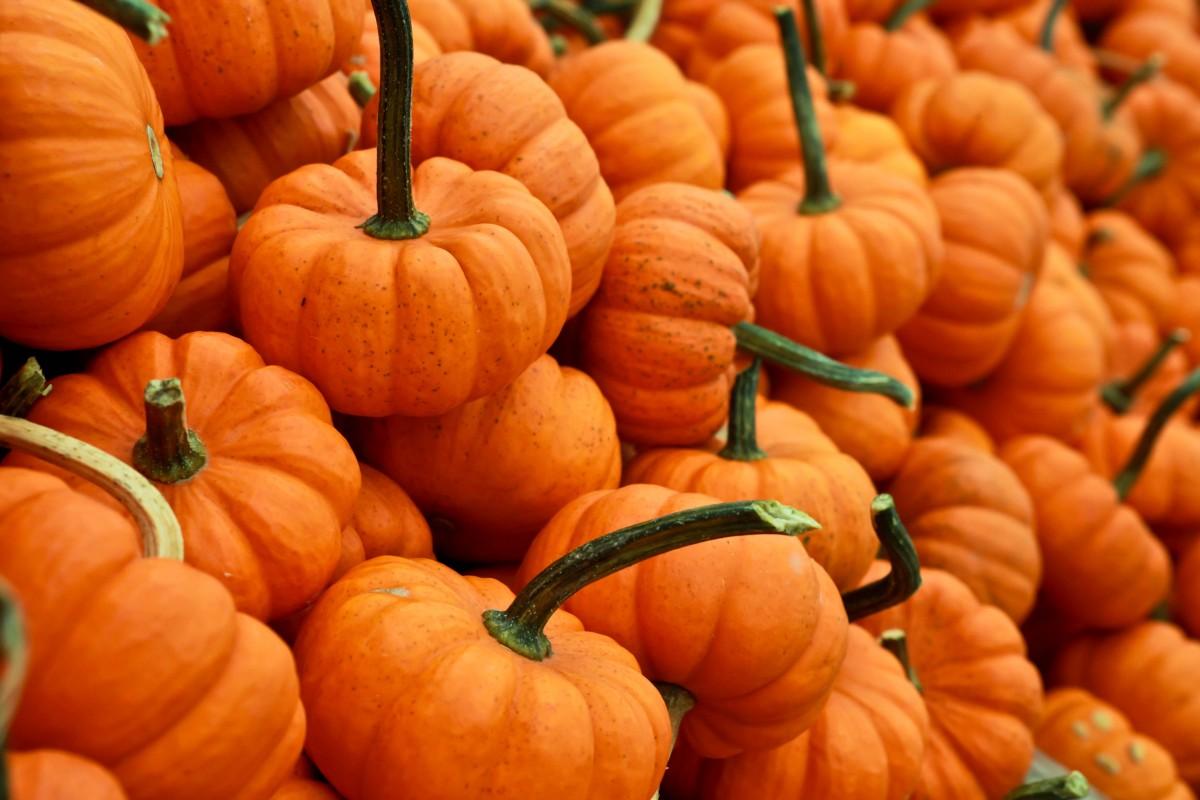 Labu Kuning Oranye