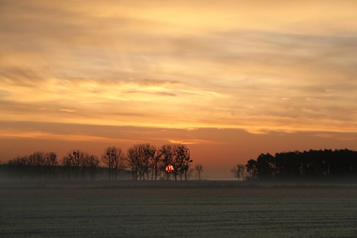 free images   landscape  tree  water  nature  horizon  branch  bird  sunrise  sunset  mist