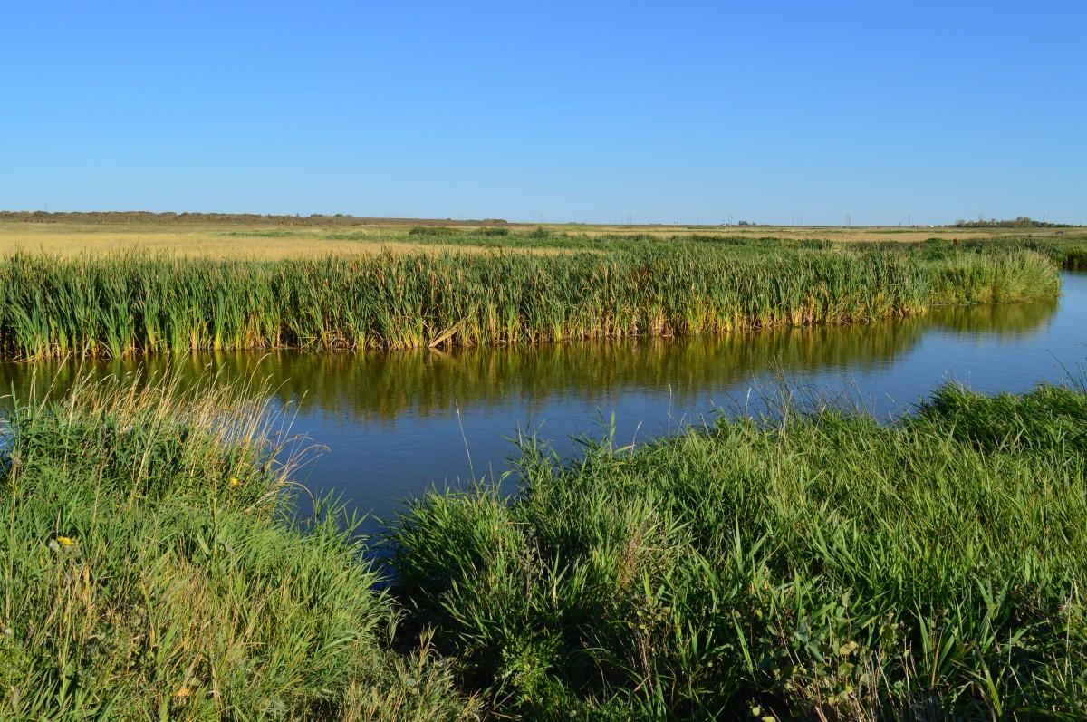 free images   landscape  water  creek  swamp  wilderness